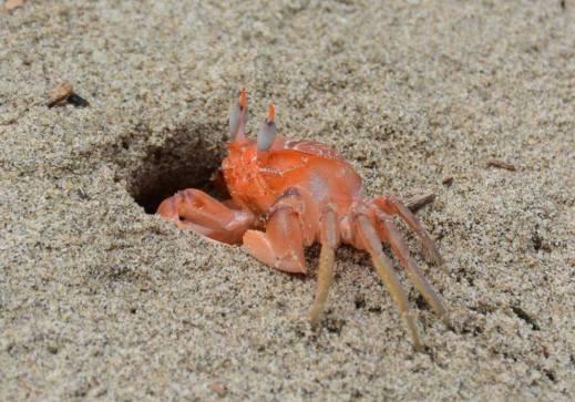 Crab on beach.jpg