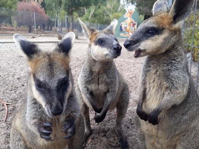 zoo pic 1.jpg